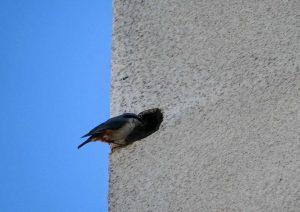 En putsfasad där en fågel sitter i ett hål i den putsade fasaden